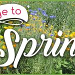 Spring Outer Banks Recipes