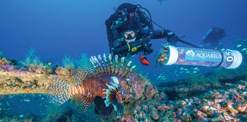 lionfish outer banks