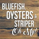 Recipes Bluefish Oysters Striper