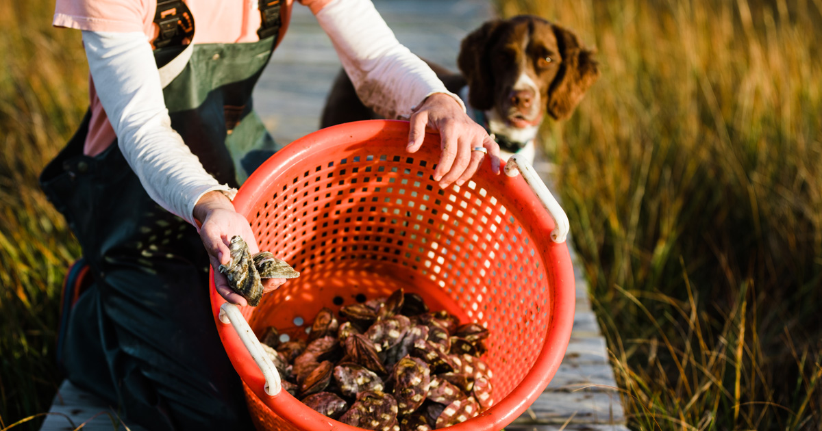 slash creek oysters