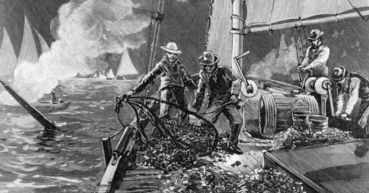 north carolina oyster wars