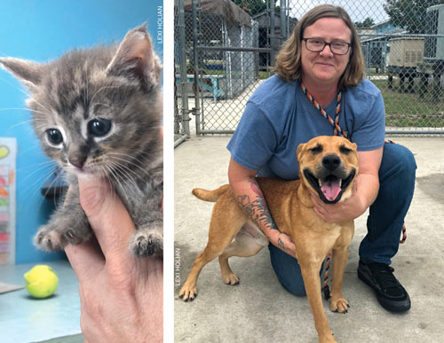 foster with obx spca