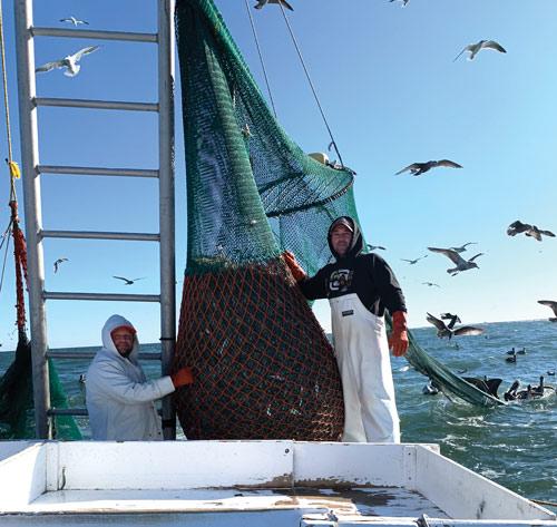 obx shrimping