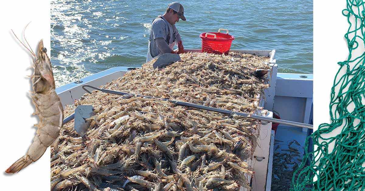 shrimping on outer banks